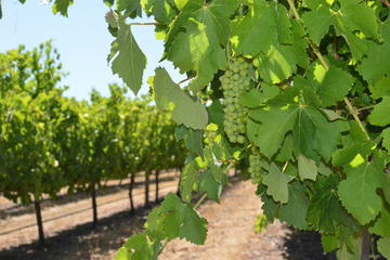 Busselton Wine Tasting & Winery Tours