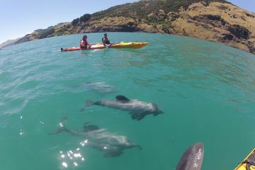 Akaroa Tours, Travel & Activities, South Island, New Zealand