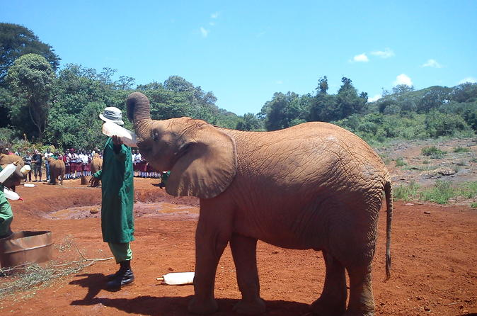 David Sheldrick wildlife trust and Giraffe center day trip