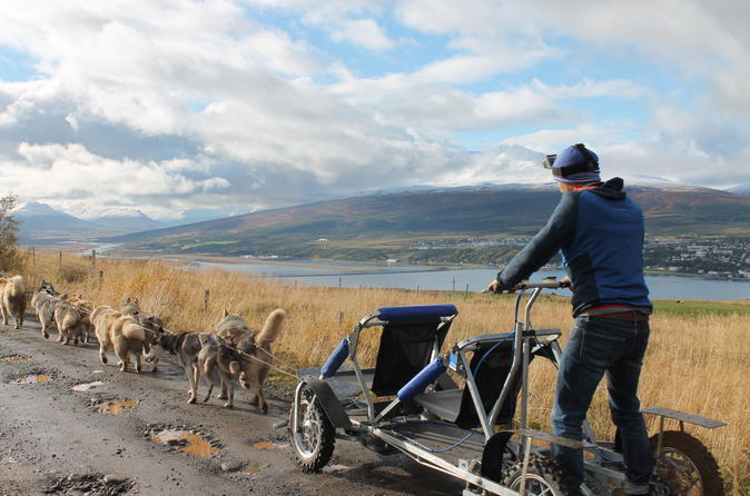 Husky Dog Kart North Iceland