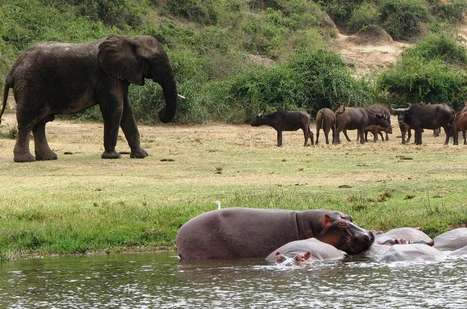 3 Days to Queen Elizabeth National Game Park