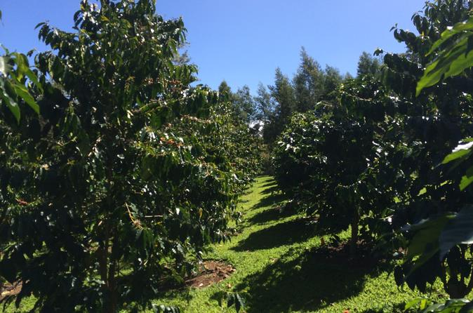 Half-Day Kula Coffee Tour