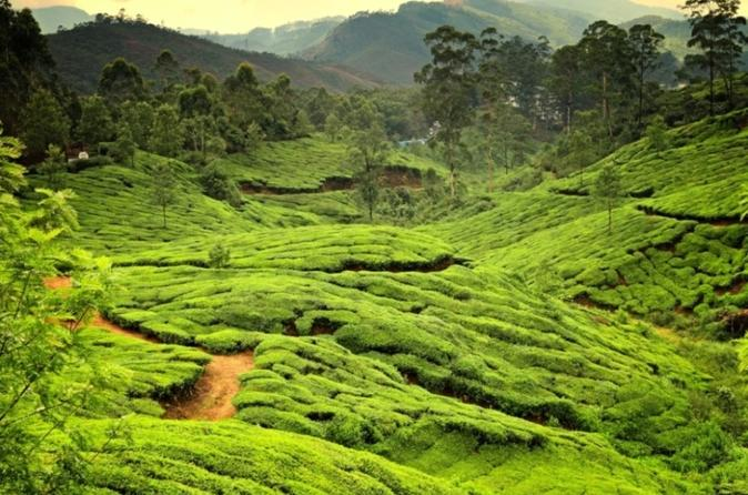 6-Night Private Kerala Tour from Kochi
