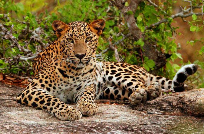 Yala National Park Adventure From Galle Lonely Planet
