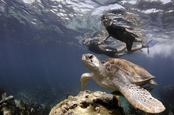 Private Tour Swim with turtles and Cenote