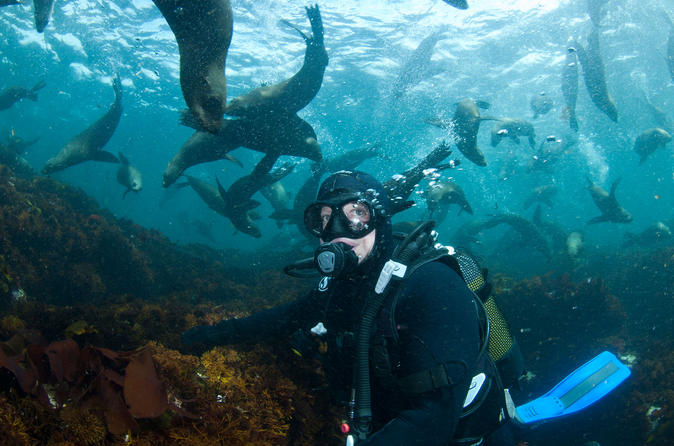 Full Day Snorkeling with Seals and Cape Peninsula private tour