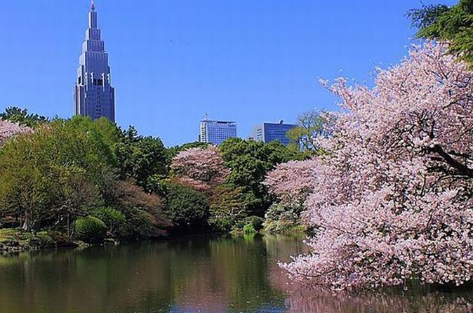 Tokyo: Cherry Blossom Sakura Viewing Tour by Bus including Buffet Lunch
