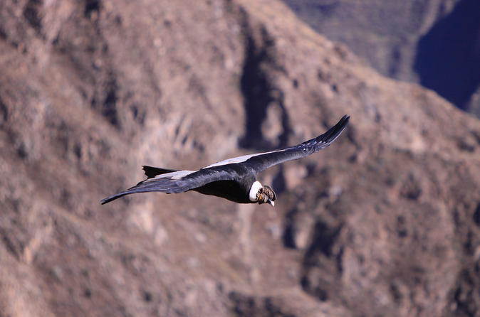 2 Day Colca Canyon Tour Group Service