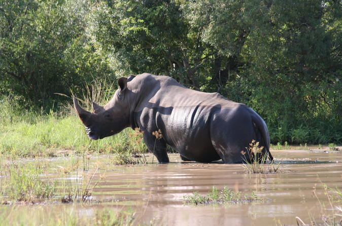Private 3-Day Tented Kruger Park Safari from Johannesburg