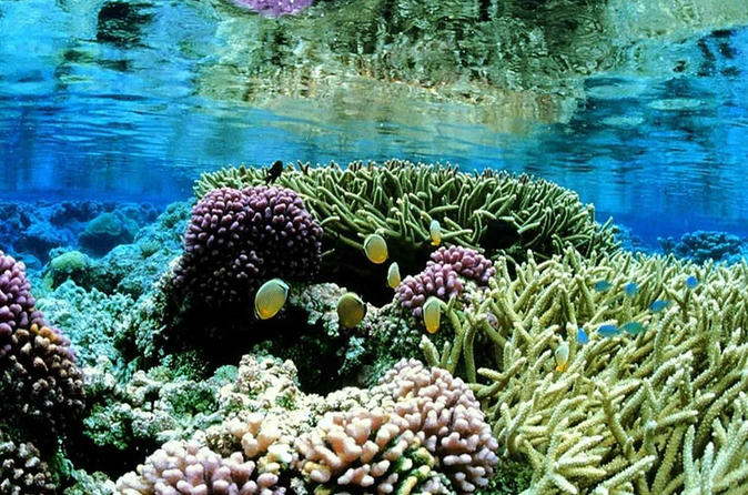 Private Day Tour: Snorkelling Adventure in Negombo