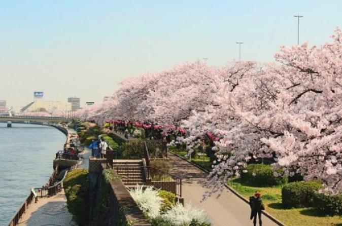 Full-Day Cherry Blossom Tour in Tokyo including Buffet Lunch