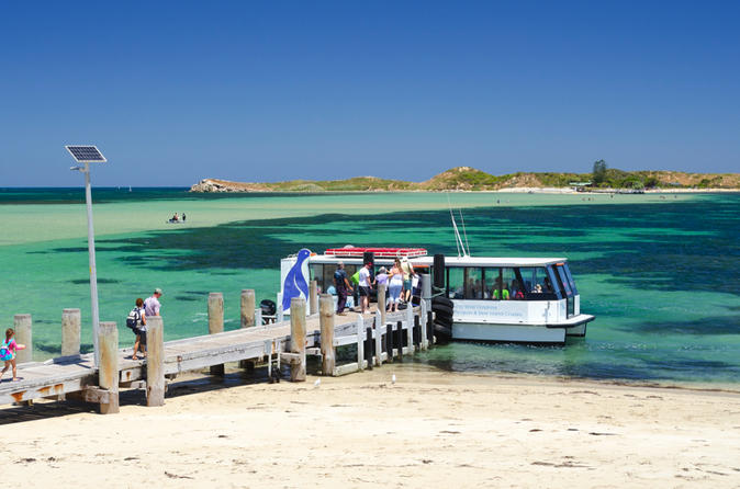 Penguin Island and Caversham Wildlife Park Day Trip From Perth