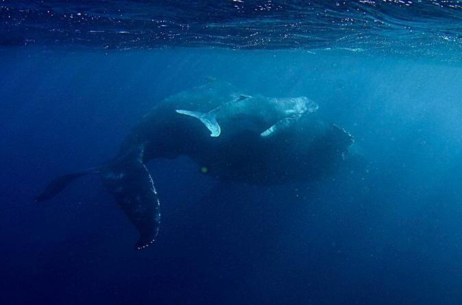 Whale Shark and Humpback Whale Day Trip from Exmouth