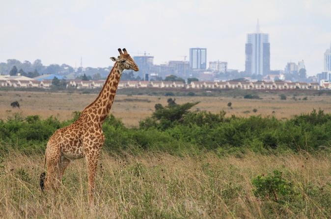 Nairobi National Park, David Sheldrick Elephant Orphanage, Giraffe Center and Karen Blixen Museum Day Tour in Nairobi