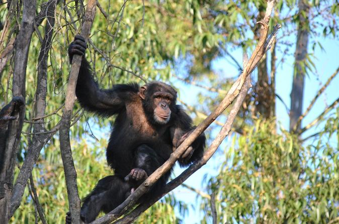 Chimpanzee Eden and Botanical Gardens Private Tour from Hazyview