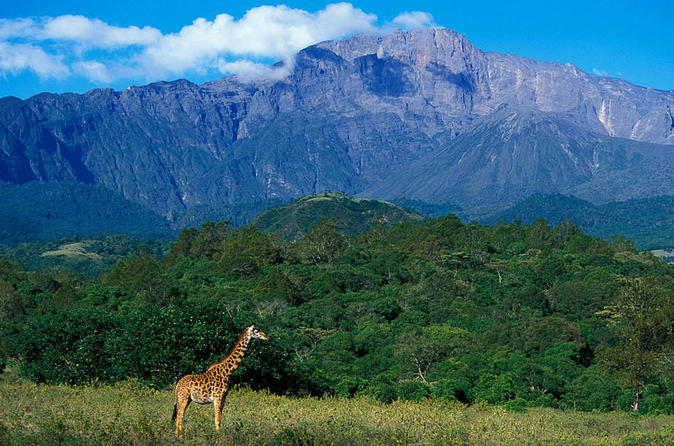 Full Day To Arusha National Park