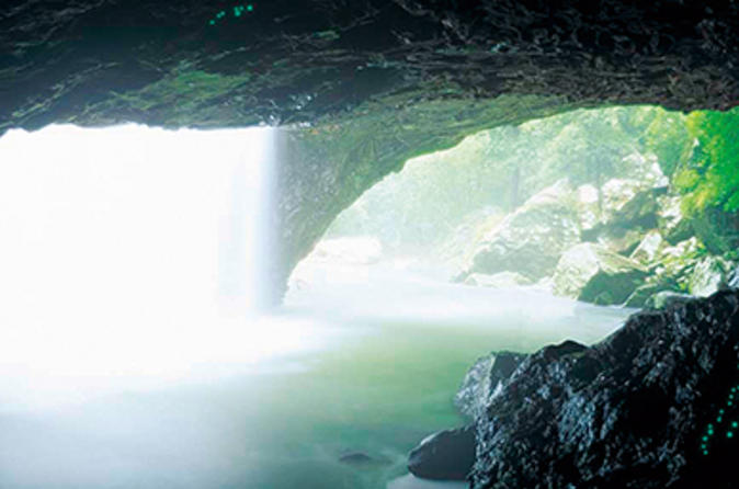 Glow-worm-cave-and-natural-bridge-tour-from-gold-coast-in-gold-coast-138567