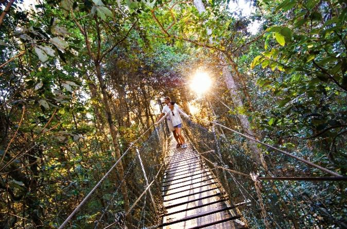 Ou0027Reillyu0027s Lamington National Park and Tree Top Canopy Tour in Brisbane Australia - Lonely Planet & Ou0027Reillyu0027s Lamington National Park and Tree Top Canopy Tour in ...