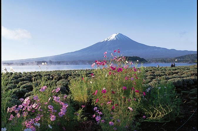 Mt-fuji-and-aokigahara-forest-day-trip-from-tokyo-in-tokyo-108370