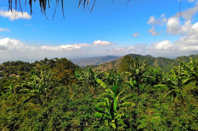 Blue Mountain Highlights Tour In Jamaica From Kingston