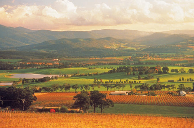 Yarra-valley-wineries-and-puffing-billy-steam-train-day-tour-from-in-melbourne-115294