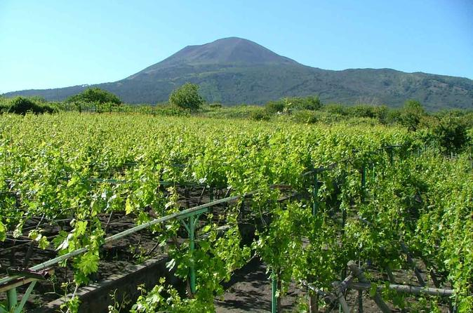 Pompeii and Vesuvius Wine-Tasting Tour