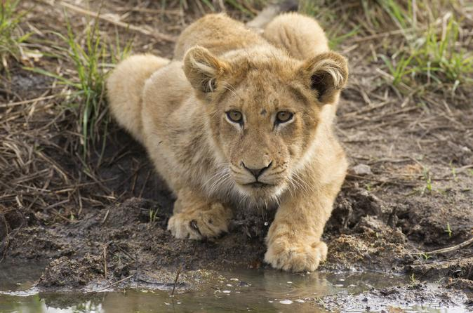 3-day-kruger-park-wildlife-safari-in-johannesburg-134704