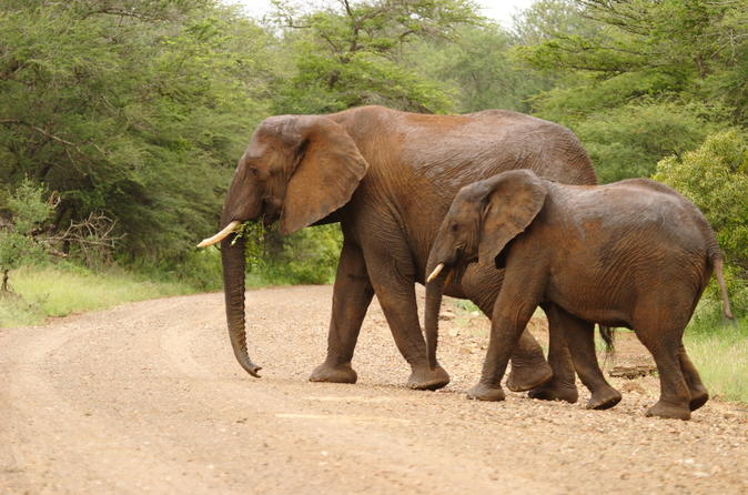 4-day-kruger-national-park-safari-adventure-in-kruger-national-park-143381