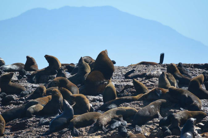 Mossel Bay Shore Excursion: Mossel Bay City Tour and Seal Island