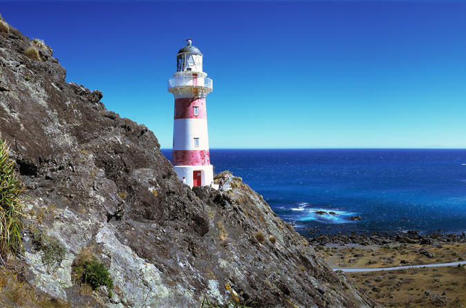 Palliser Bay and Coastal Delights Tour from Wellington