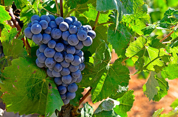 Valencia Wine Tour with Tasting and Lunch