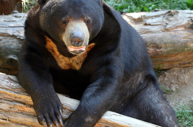 Sun-bear-keeper-for-a-day-phnom-tamao-wildlife-rescue-center-day-trip-in-phnom-penh-149774