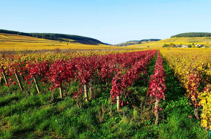 Private Day Trip to Macon Villages with Wine Tasting from Lyon