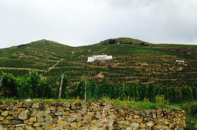 Rhone Valley Wine Tours From Lyon