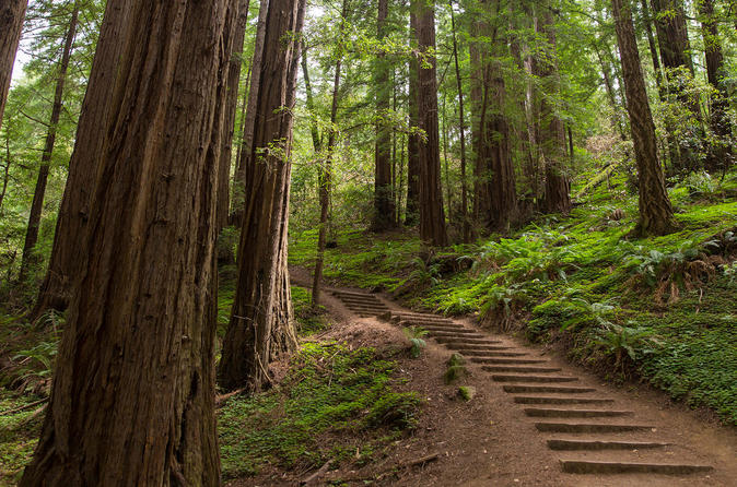 Muir Woods, Giant Redwoods, and Sausalito Half-Day Trip