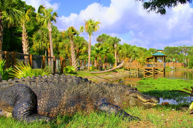 Explore Wild Florida from Orlando