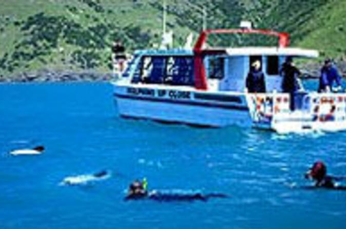 Akaroa-swim-with-dolphins-tour-from-christchurch-in-christchurch-41330
