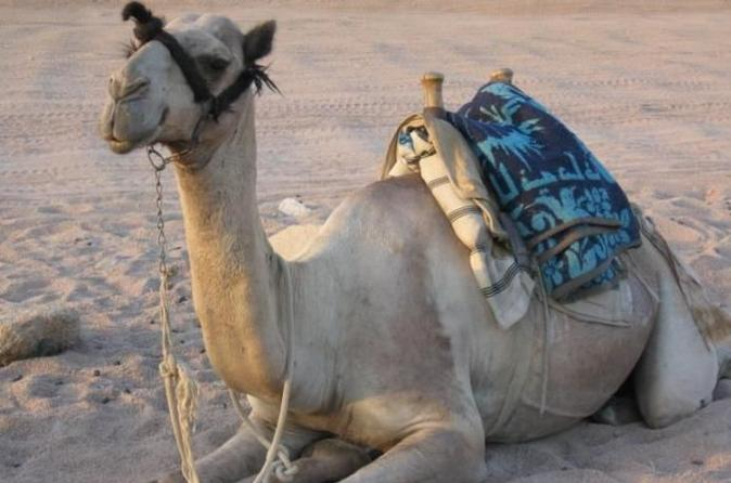 Sharm El Sheik to Sinai Jeep Safari with Camel Ride and Lunch