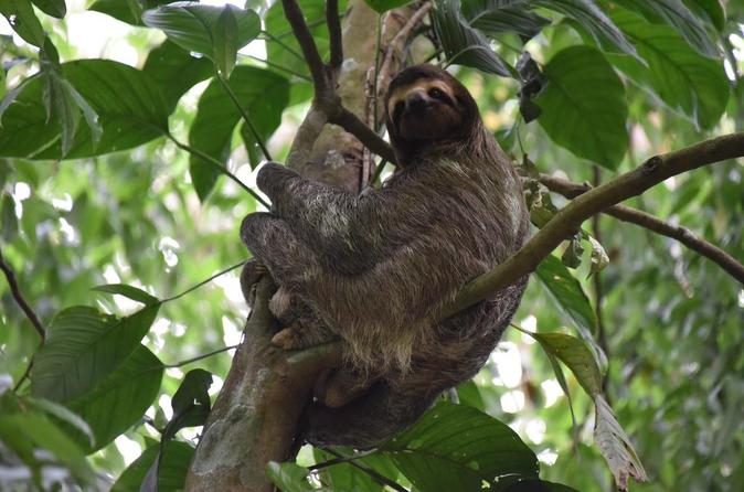Sloth Adventure from Guanacaste