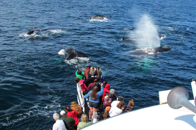 Full-Day Trip to Plimoth Plantation, Whale Watch Tour from Boston