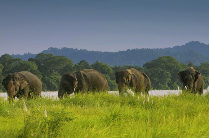 2 Nights 3 Days Jungle Safari Tours in Chitwan Nepal