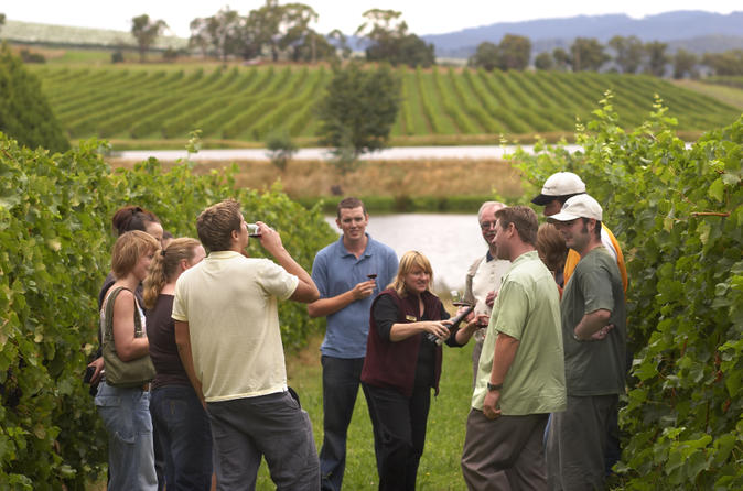 Yarra-valley-wine-and-winery-tour-from-melbourne-in-melbourne-118288