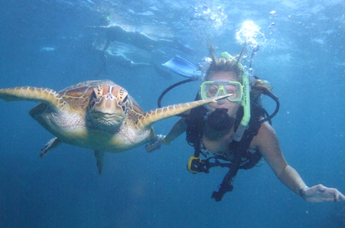 Great-barrier-reef-diving-and-snorkeling-cruise-from-cairns-in-cairns-115451