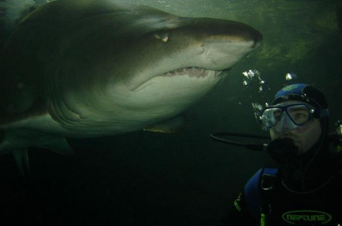 Shark-diving-xtreme-in-sydney-in-sydney-117642