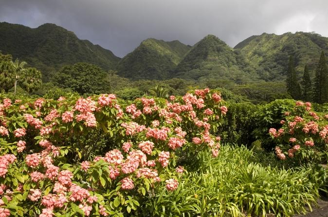 Valley-of-the-rainbows-oahu-small-group-adventure-in-oahu-136643