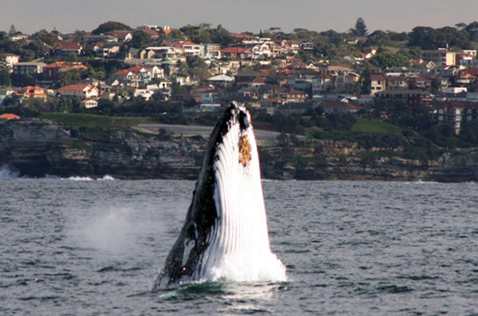Sydney-eco-whale-watching-small-group-cruise-in-sydney-138158