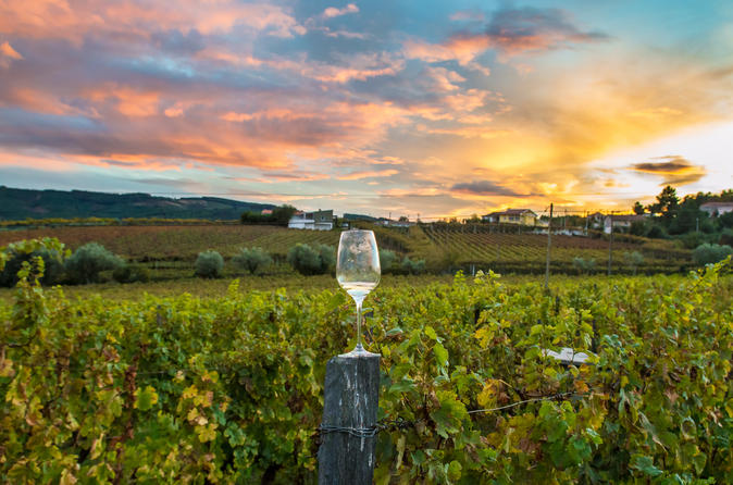 8 Hour Wine Country Tour from San Francisco