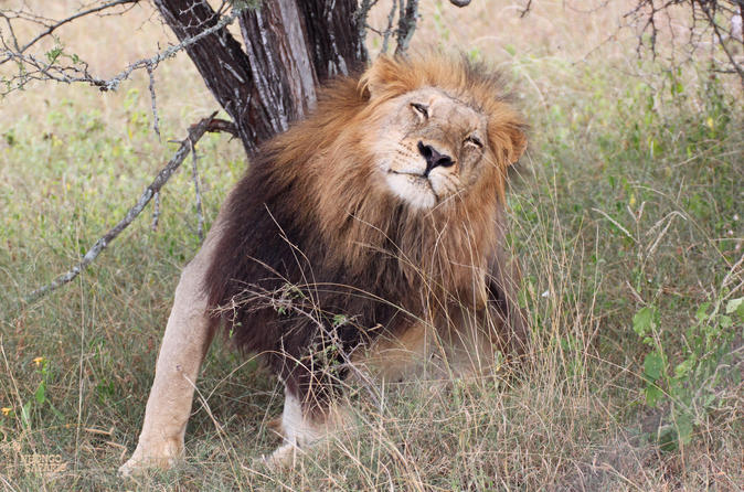 4-Day Guided Kruger Park Adventure Safari from Johannesburg