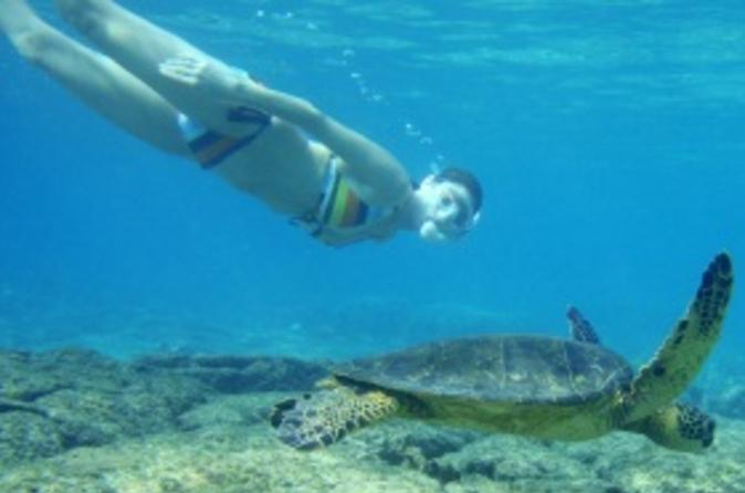 Turtle-snorkeling-adventure-from-cancun-in-cancun-109679