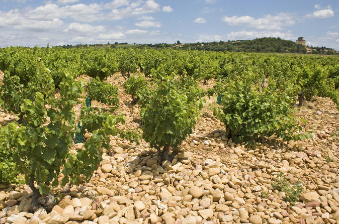 Private-rhone-valley-wine-tour-from-avignon-chateauneuf-du-pape-and-in-avignon-149858